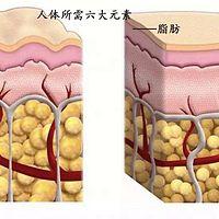 人体所需六大营养元素之脂肪 张韶平