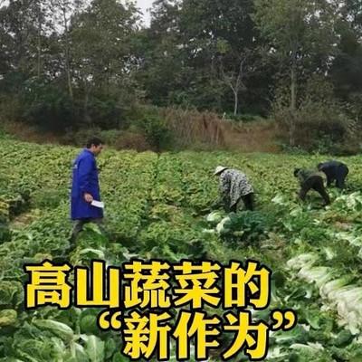 探寻湖北蔬菜黑科技