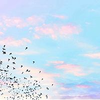 飞鸟无足 永不停歇