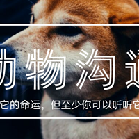 iLia动物沟通