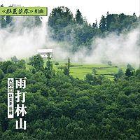 赵文多&彭博:雨打林山