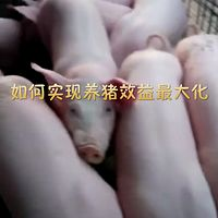 如何实现养猪利益最大化