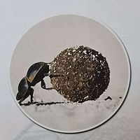 法布尔昆虫记之圣甲虫