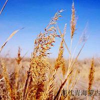 清代青海蒙古人口锐减的原因