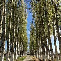 天堑变通途—为您讲述宁夏黄河大桥的故事