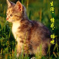 生活·情感·猫咪