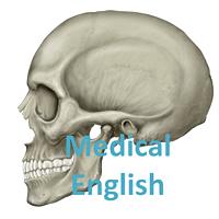 Medical English 解剖