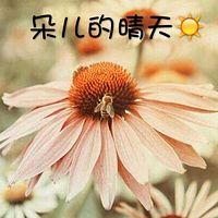 朵儿的晴天