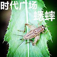 【晓月讲名著】《时代广场的蟋蟀》